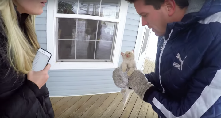 Frozen Kitten is Brought Back to Life